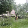 A Bradford Pear that was damaged in a storm