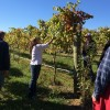 Amie Baudoin from Morgan Ridge Vineyards shows the class of 2014 Piedmont Farm School the different varieties of grapes and how she helped start the vineyard.