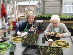 Therapeutic Horticulture