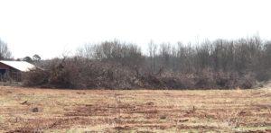 Dead Peach Trees