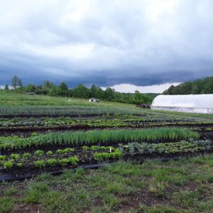 Cover photo for Big Dreams, Small Farms-Market Gardens: Production Planning