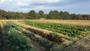 Small-Scale Organic Vegetable Production