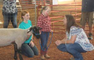 Special Sheep Show