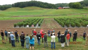 people looking at organic tomato studies in the field