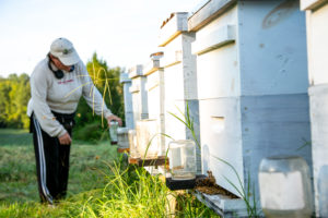 Woman checking bee hives