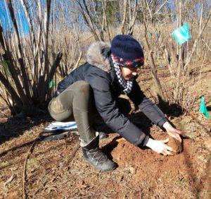 woman taking truffle from soil