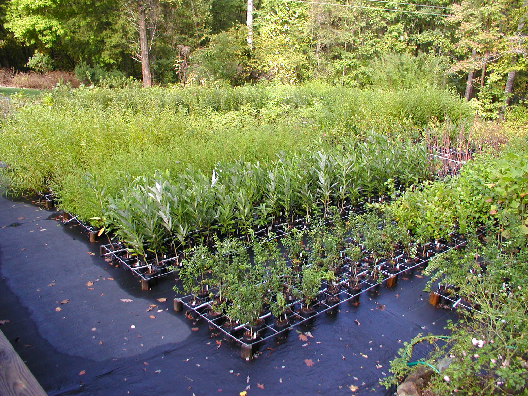 Image of native Piedmont plants