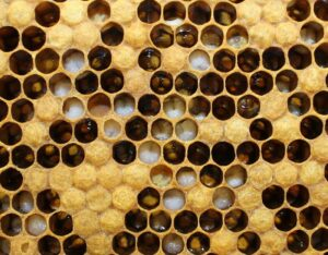 Picture of Bee Hive